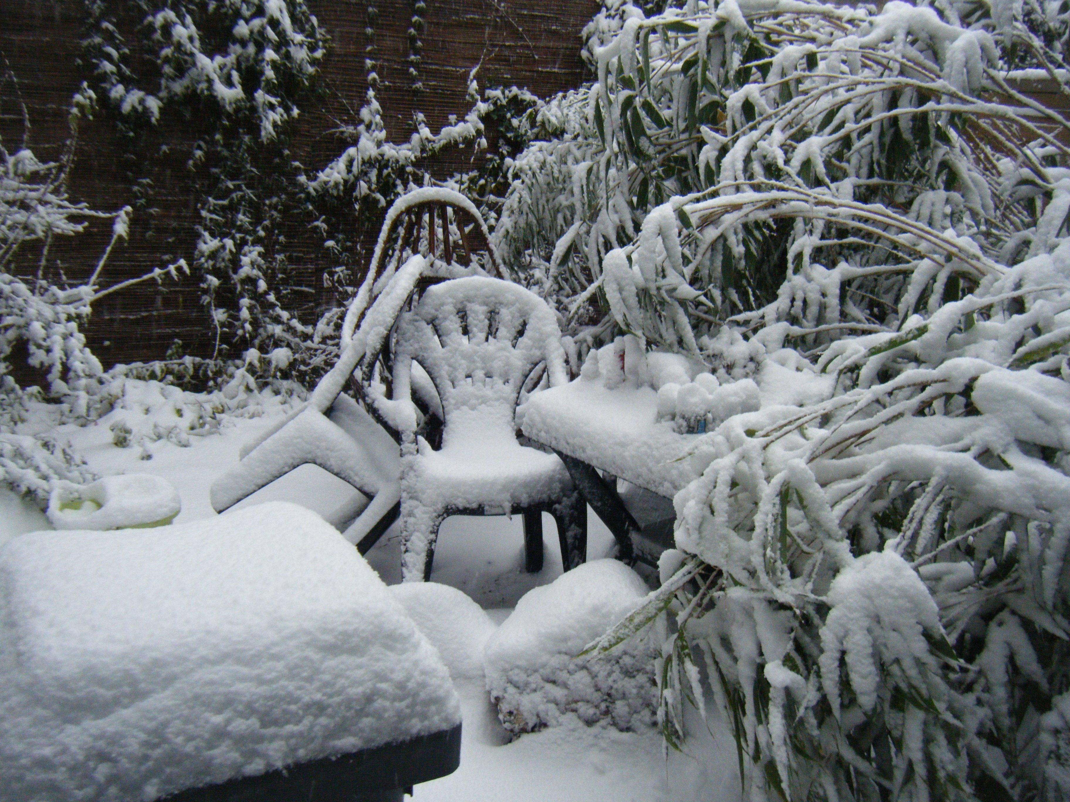 jardinsousneige002.jpg